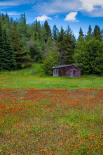Old Wooden Cabin At The Edge O...
