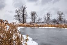 Frozen Pond With Cattails In W...