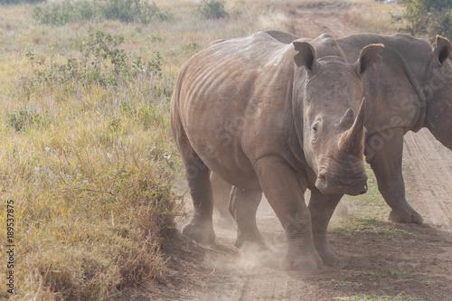 Fotografía Rhinoceros in nature