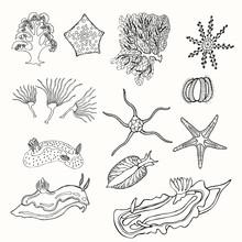 Hand Drawn Marine Life Set Isolated In White.