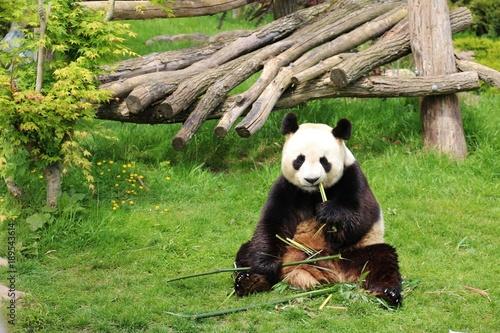 Valokuva  Zoo de Beauval