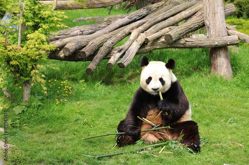 Fotografia, Obraz  Zoo de Beauval