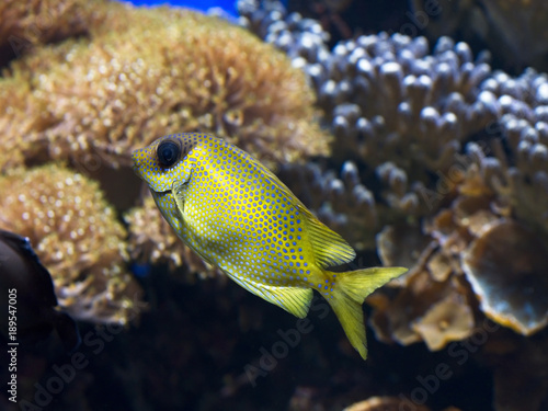 Exotic Tropical Fish With Spots Pattern Buy This Stock Photo And