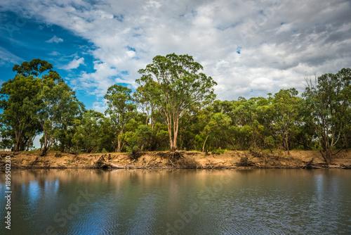 Printed kitchen splashbacks River Australian Riverfront Landscape. Eucalyptus trees near Murrumbidgee River in Hay, New South Wales, Australia