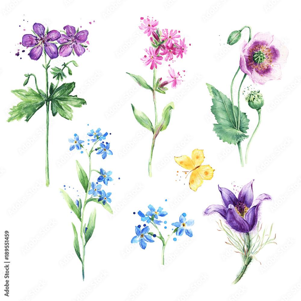 Zestaw Kwiatowy Laka Kolekcja Z Dzikich Kwiatow Akwarela Rysunek Mak Anemone Niezapominajka I Butterfly 189551459 Kwiaty Naklejki Ecowall24 Pl