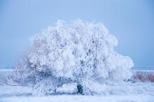 Frozen Tree On Landscape Near Flathead Lake