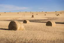 Landscape View Of The Farmland...