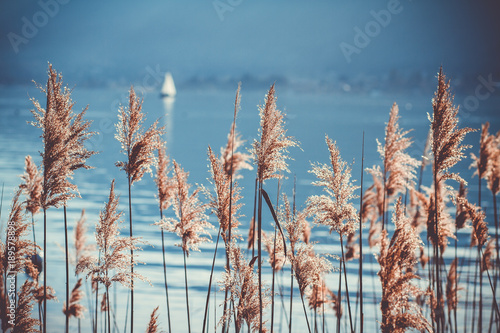 Fotografie, Obraz  Voilier sur le lac à Annecy