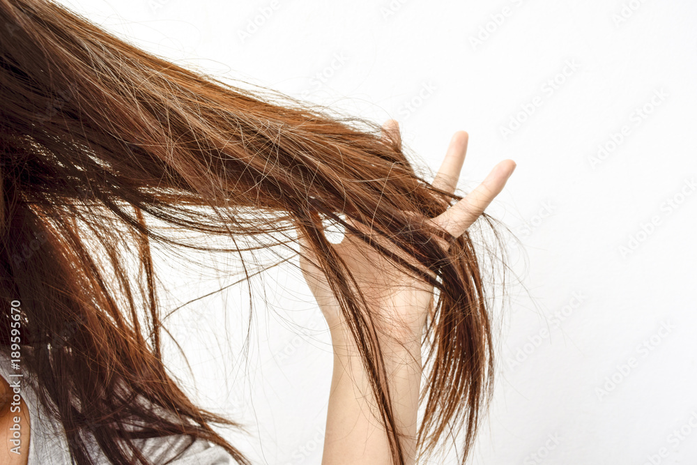 Fototapeta Combing with brush and pulls long hair. Daily preparation for looking nice, Long Disheveled Hair,Holding Messy Unbrushed Dry Hair In Hands. Hair Damage, Health And Beauty Concept.