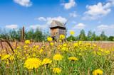 Fototapeta Kwiaty - Łąka z wiatrakiem w tle w skansenie w Maurzycach