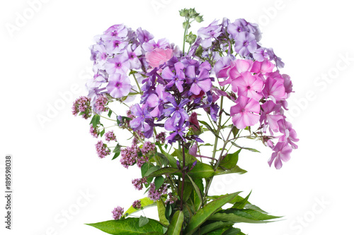 Fotobehang Lilac Bouquet of phlox isolated on white background.
