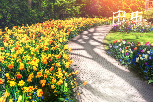 Spring landscape with park alley and yellow daffodils