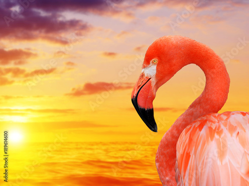 Spoed Foto op Canvas Flamingo Portrait of a flamingo at sunset.