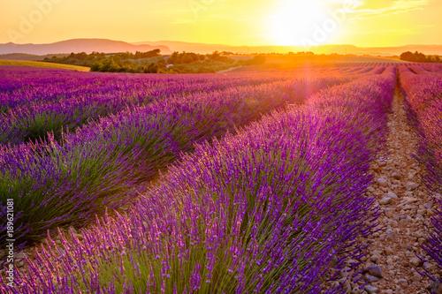Champ de lavande en été, coucher de soleil. Provence, Valensole, France.
