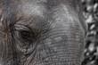 Das Auge eines Elefanten