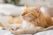 Red Cat Sleeping On Blanket At...