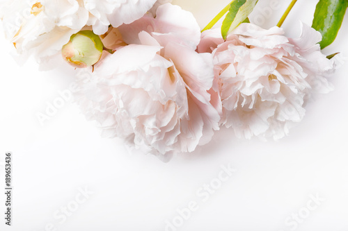 White peony on white background. Greeting card, invitation in light pastel colors.