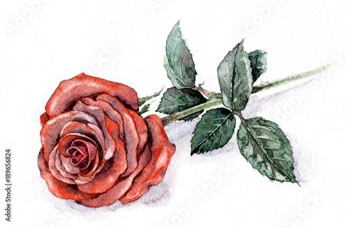 Fotografie, Obraz  Watercolor Red Rose