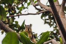 écureuil Très Curieux