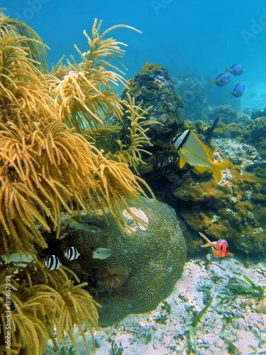Staande foto Koraalriffen Underwater fish with soft and stony corals, Caribbean sea
