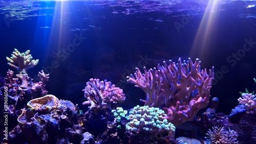 Poster Sous-marin Coral reef aquarium tank scenic moment