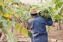 Asian Senior Farmer Holding Green Banana, Farming Struggling During Covid-19 Coronavirus Pandemic Lockdown, Agriculture Prices Crisis