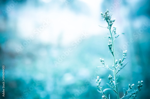 Poster Natuur grass flower in morning light of sunrise with blue color filter efect
