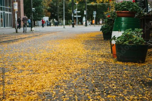 Foto op Canvas Herfst Autumn city scene. Street in Berlin. The yellow foliage lies on the sidewalk.