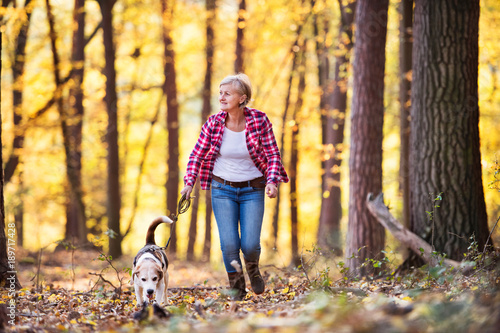 Senior woman with dog on a walk in an autumn forest. Canvas Print