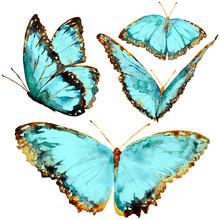 Beautiful Blue Butterflies, Wa...