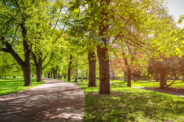 Park in the spring with green lawn, sun light. Stone pathway in a green park
