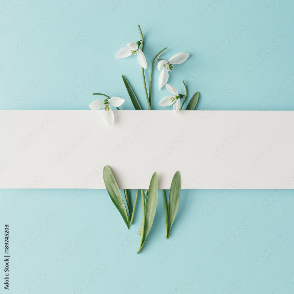 Fototapety, obrazy: Creative layout made with snowdrop flowers on bright blue  background. Flat lay. Spring minimal concept.