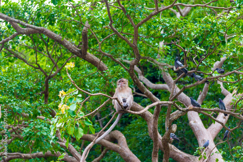 Foto op Plexiglas Aap Thai monkey resting on the branches of a dense tree
