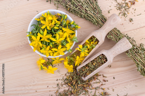 St. John's wort / top view on dried and fresh, flowering St. John's wort on a wooden background
