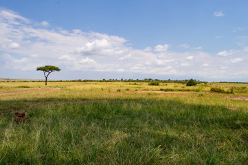 View of the savannah in Maasai Mara Park Kenya