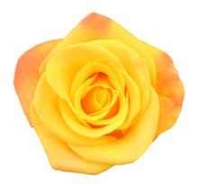 Macro Of Perfect Yellow Rose F...