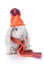 Funny Lop Eared Rabbit Dressed...