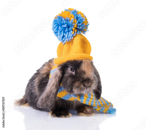 Funny lop eared rabbit dressed in a knitted hat and scarf isolated on white