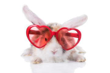 Adorable lop eared rabbit wearing heart shaped glasses, isolated on white