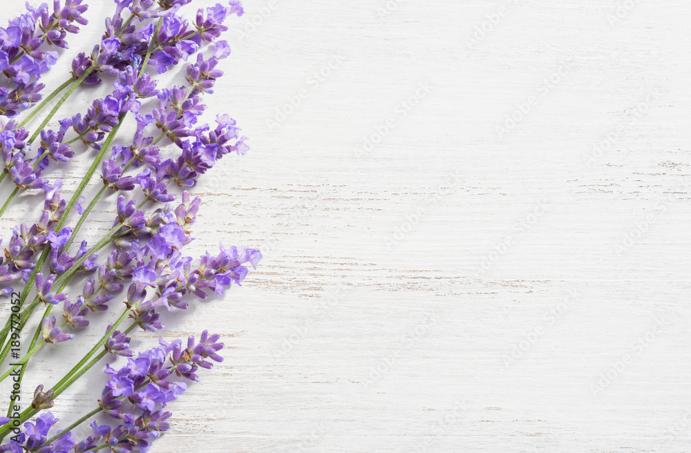 Fototapety, obrazy: Sprigs of lavender on  wooden shabby background.
