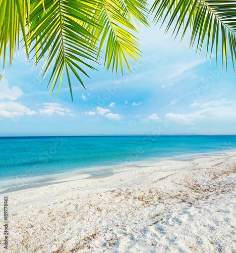 Foto auf Gartenposter Strand Palm tree over a tropical beach