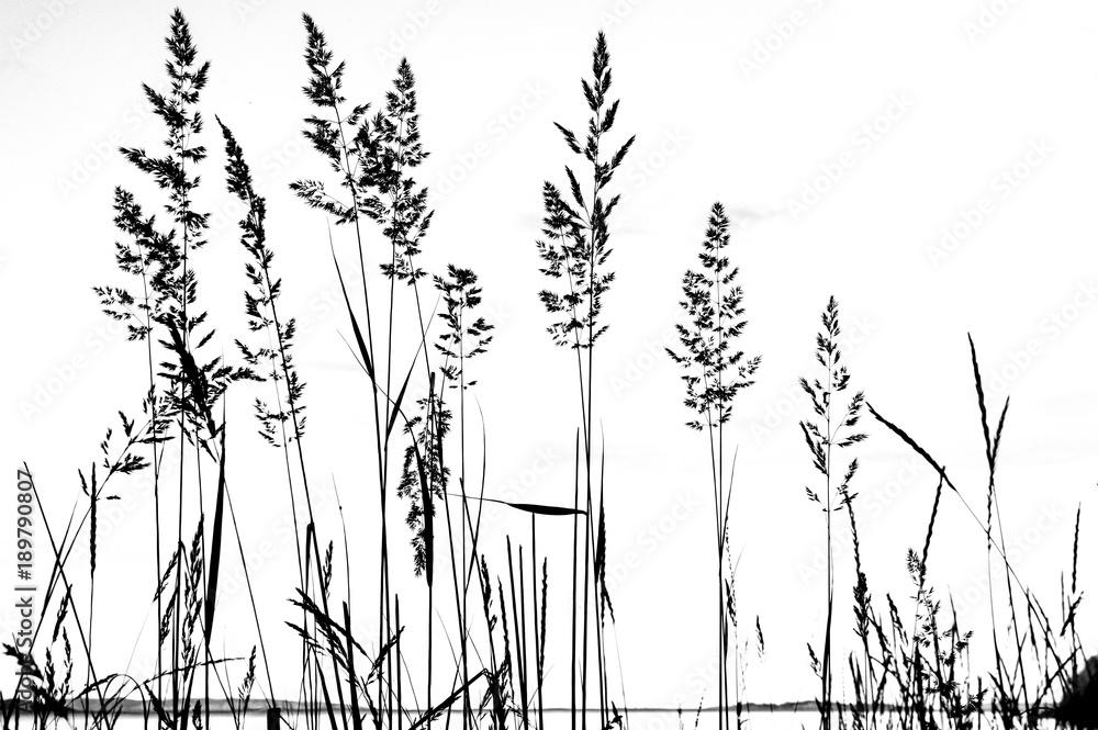 Fototapeta Plantes en noir et blanc