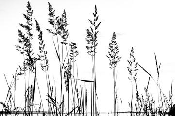 Plantes en noir et blanc