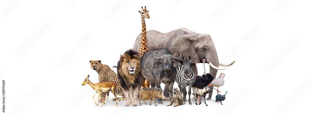 Fototapeta Safari Animals Together Isolated Banner