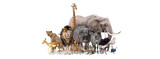 Safari Animals Together Isolated Banner