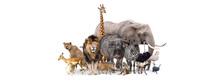 Safari Animals Together Isolated Banner