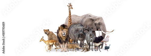 Safari Animals Together Isolated Banner Wallpaper Mural