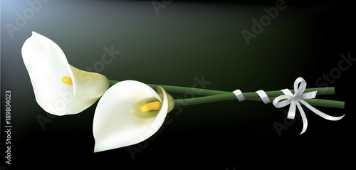 Fotomural Bouquet of calla lilies isolated on a dark background.