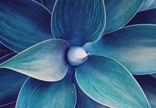 Abstract Ultra Violet Agave Pl...