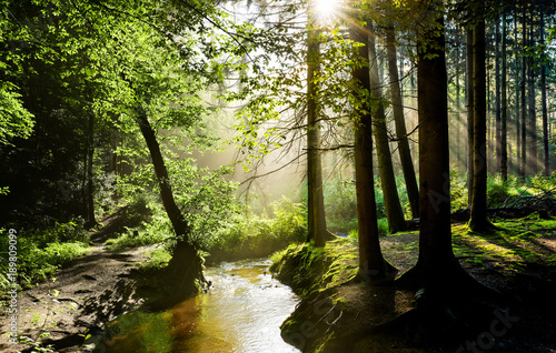 Fotobehang Bossen Beautiful sunrise in a misty forest with sunbeams shining through the trees